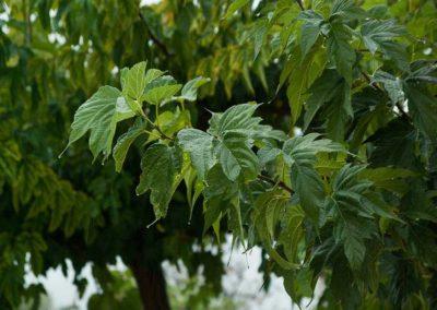 la-goutte-d-eau-arbres-a-ombre1