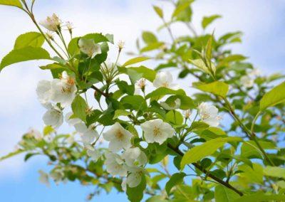 la-goutte-d-eau-arbres-a-ombre2