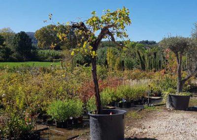 la-goutte-d-eau-arbres-fruitiers1