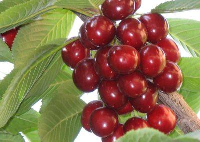 la-goutte-d-eau-arbres-fruitiers4