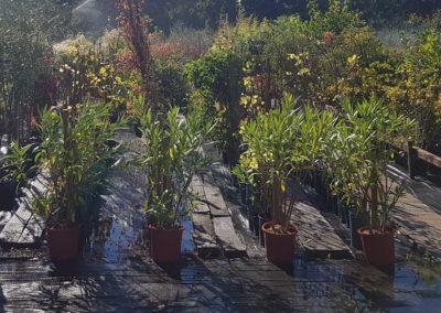 la-goutte-d-eau-arbustes1