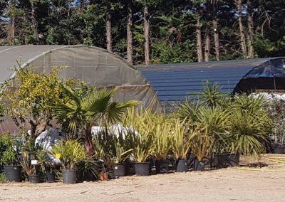 la-goutte-d-eau-arbustes2