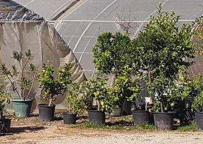 la-goutte-d-eau-arbustes3