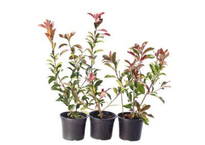 la-goutte-d-eau-arbustes5