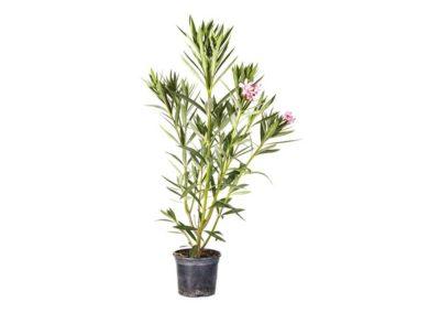 la-goutte-d-eau-arbustes7