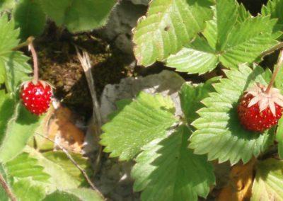 la-goutte-d-eau-fruitsrouges2