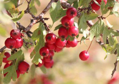 la-goutte-d-eau-fruitsrouges3