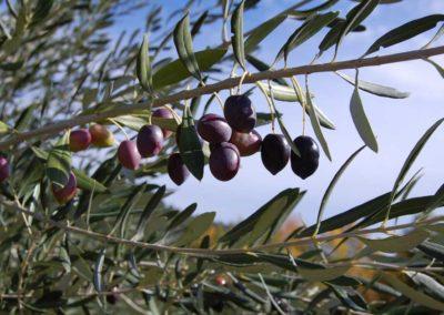 la-goutte-d-eau-olivier2