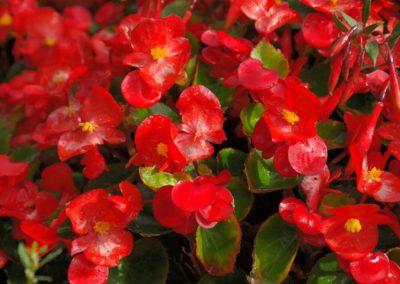 la-goutte-d-eau-plantes-a-massifs5